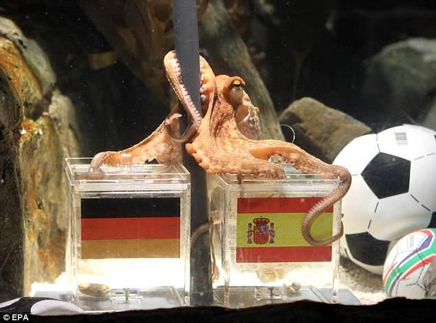 Fifa Octopus Eaten | World Cup 2018 Betting Predictions